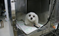 狂犬病予防接種が始まりました。
